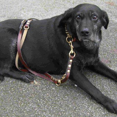 Signature Leather Police Training Dog Leads