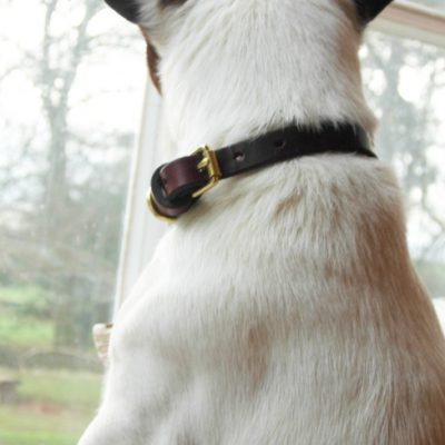 Signature Leather Dog Collar