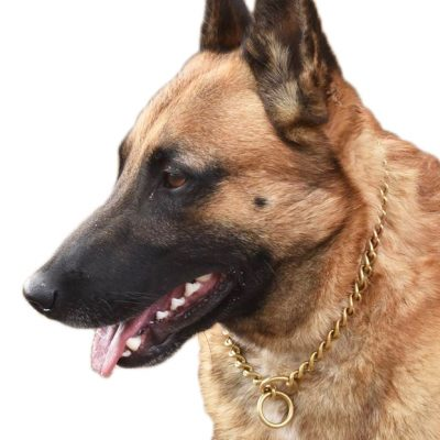 Brass Chain Dog Slip Collar