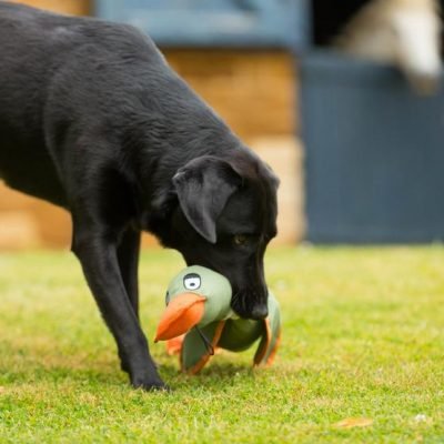 Throwing Duck Dog Toy