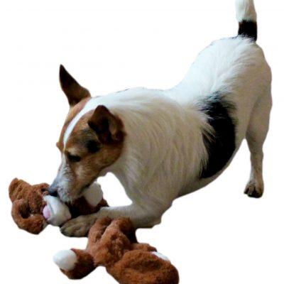 Unstuffed Flat Bunny Dog Toys