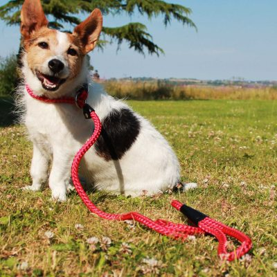 Rope Dog Slip Leads