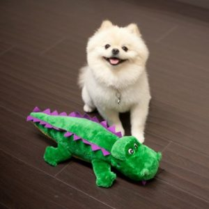 Alligator Dog Toys