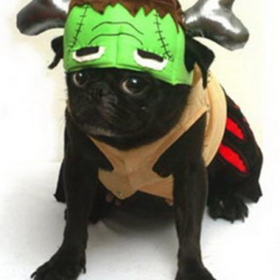 Monster Dog Costume