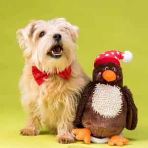 Christmas Bow Tie Turkey Dog Toy