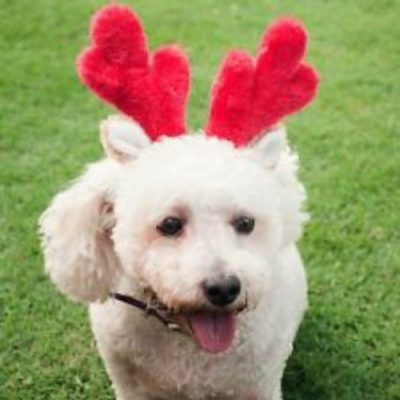 Christmas Fun Dog Antlers