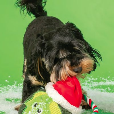Christmas Large Sprout Toy